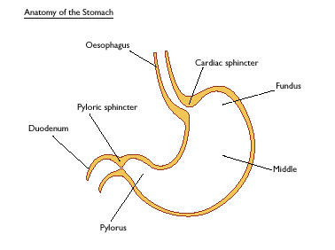 gastric surgeries for gist